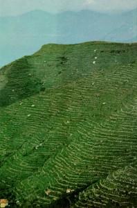 La collina del Corniolo su 'National Geographics' del giugno 1963